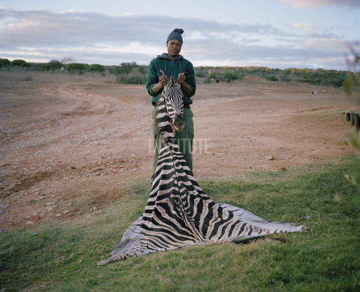 skinner with trophy zebra, south Africa, from the series hunters. Poto by David Chancellor